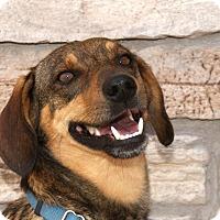 Adopt A Pet :: Gibbs - Norman, OK