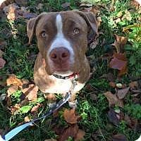 Adopt A Pet :: Grover - Park Ridge, NJ