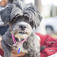 Adopt A Pet :: SOPHIE - Inland Empire, CA
