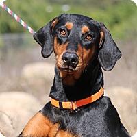 Adopt A Pet :: Hannah - Fillmore, CA