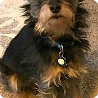 Adopt A Pet :: Fritz-ADOPTION PENDING - Boulder, CO