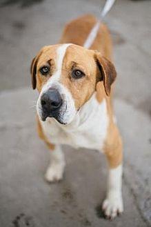 Hound (Unknown Type) Mix Dog for adoption in Fresno, California - Jodie