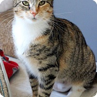 Adopt A Pet :: Claire - Dalton, GA