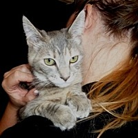 Adopt A Pet :: Gemma - Calimesa, CA