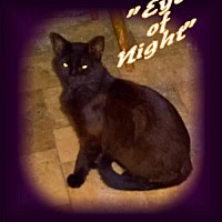 Adopt A Pet :: Eye of Night - Piedmont, MO