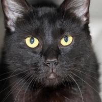 Adopt A Pet :: *NATASHA - Camarillo, CA