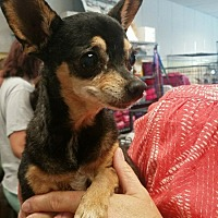 Adopt A Pet :: Abuela - Willows, CA