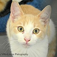 Adopt A Pet :: Mocha - Eureka, CA