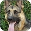 Photo 2 - German Shepherd Dog Dog for adoption in Los Angeles, California - Princess von Haritons