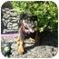 Photo 1 - Rottweiler/Retriever (Unknown Type) Mix Puppy for adoption in Glastonbury, Connecticut - Sally