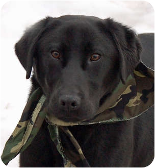 Labrador Retriever Mix Dog for adoption in Mora, Minnesota - Chet