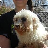 Adopt A Pet :: Angel - TINY!! - Antioch, IL