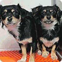 Adopt A Pet :: Estrella - Only $35 adoption! - Litchfield Park, AZ