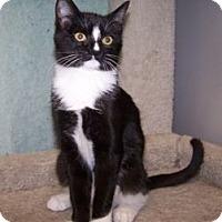 Adopt A Pet :: K-Dave3-Nola - Colorado Springs, CO