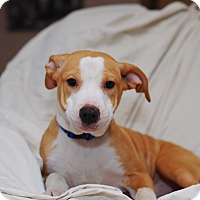 Adopt A Pet :: Rusty - Randolph, NJ