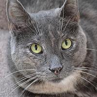Adopt A Pet :: Moeshe - Independence, MO