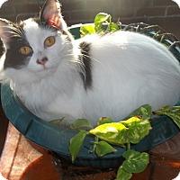 Adopt A Pet :: Zora - Acme, PA