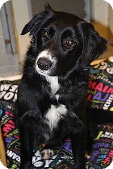 Border Collie Mix Dog for adoption in Grants Pass, Oregon - Sally