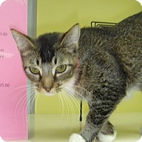 Adopt A Pet :: Gwendolyn - Hamburg, NY