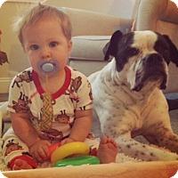Adopt A Pet :: Merle - Edisto Island, SC