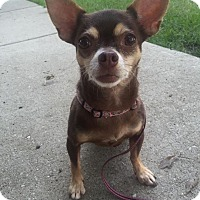 Adopt A Pet :: Carlee - Chicago, IL