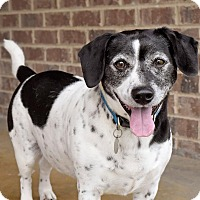 Adopt A Pet :: Russell - Knoxville, TN