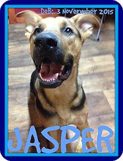 German Shepherd Dog Mix Dog for adoption in Albany, New York - JASPER