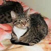 Adopt A Pet :: Reagan - Chicago, IL