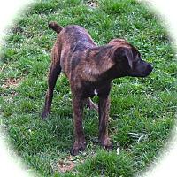 Adopt A Pet :: Calais - Ijamsville, MD