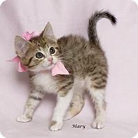 Adopt A Pet :: Mary - Kerrville, TX