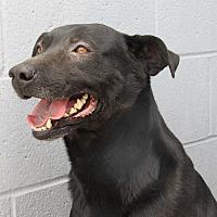 Adopt A Pet :: Marley - Sierra Vista, AZ