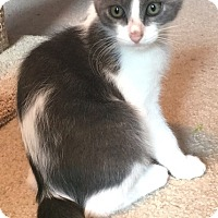 Adopt A Pet :: Piper - Fort Worth, TX