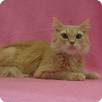Adopt A Pet :: Florence - Redwood Falls, MN