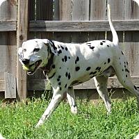 Adopt A Pet :: Prince - Joplin, MO