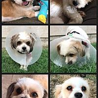 Adopt A Pet :: Bongo & Baby (bonded pair) - Long Beach, CA