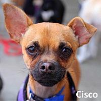 Adopt A Pet :: Cisco - Lake Forest, CA