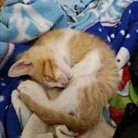 Adopt A Pet :: Jabbers - Chippewa Falls, WI