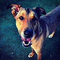 Adopt A Pet :: Marshall - St. Louis, MO