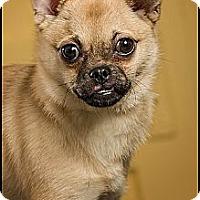 Adopt A Pet :: Molly - Owensboro, KY