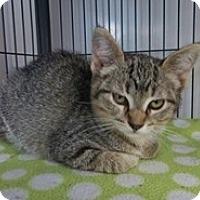 Adopt A Pet :: Mark 2 - Shelton, WA