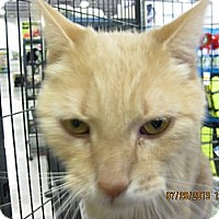 Adopt A Pet :: Dusty - West Dundee, IL