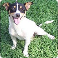 Adopt A Pet :: CRACKER JACK - Phoenix, AZ