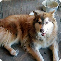Adopt A Pet :: Creed - Santa Fe, NM