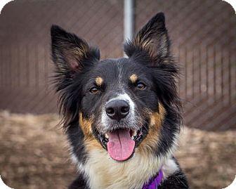 Border Collie Mix Dog for adoption in Bellingham, Washington - Susana
