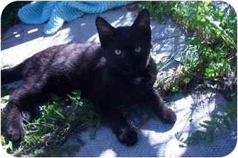 Domestic Shorthair Kitten for adoption in Port Hope, Ontario - E.T
