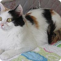 Adopt A Pet :: Kookie - North Highlands, CA
