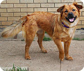 Border Collie/Mixed Breed (Medium) Mix Dog for adoption in Shreveport, Louisiana - Gigi