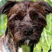 Adopt A Pet :: MISS ARYA(