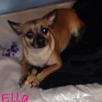 Adopt A Pet :: Ella - Fairfield, OH