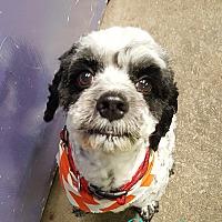Adopt A Pet :: Reggie - Pottsville, PA